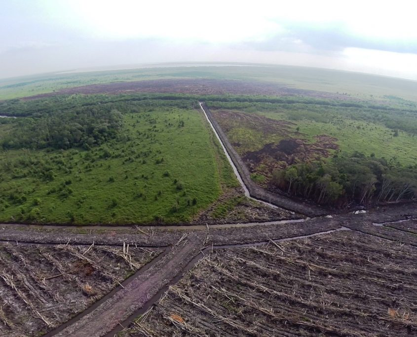 Fig. 07. Drone photograph of deforested rainforest in Kalimantan (Indonesian Borneo) for the purpose of planting a new oil palm plantation. Courtesy of WALHI.